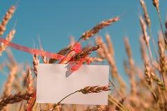 Papel en blanco en los oídos del trigo Imagen de archivo libre de regalías