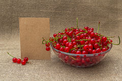 Papel en blanco y pasa roja en un cuenco Imagen de archivo