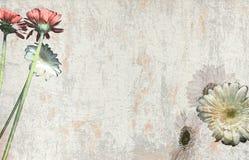 Papel floral velho fundo riscado Fotos de Stock Royalty Free