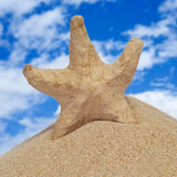 Papel-mache seastar na areia Foto de Stock