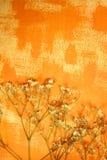 Papel pintado color anaranjado y flores secadas Fotografía de archivo