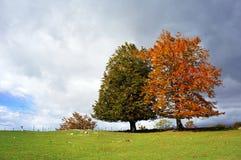 Papel pintado de dos árboles Imagen de archivo