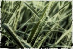 Papel pintado de la hierba Imagen de archivo libre de regalías