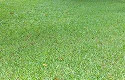 Papel pintado de la hierba Fotos de archivo libres de regalías