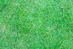 Papel pintado de la hierba verde adentro, Tailandia Fotografía de archivo libre de regalías