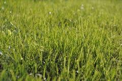 Papel pintado de la hierba verde, fondo de la primavera imágenes de archivo libres de regalías