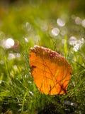 Papel pintado de la hoja del otoño Foto de archivo
