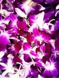 Papel pintado de la orquídea Fotografía de archivo