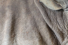 Papel pintado de la piel del rinoceronte Fotografía de archivo libre de regalías
