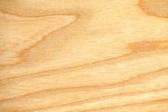 Papel pintado de la textura del árbol de haya Imagen de archivo libre de regalías