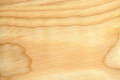 Papel pintado de la textura del árbol de haya Foto de archivo libre de regalías