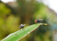 Papel pintado de las moscas Fotos de archivo libres de regalías