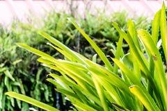 Papel pintado de las plantas Foto de archivo libre de regalías