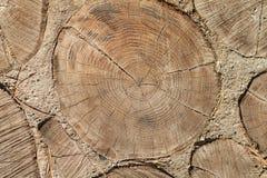 Papel pintado de madera de los tocones Imagen de archivo