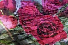 Papel pintado del color del esquema Foto de archivo