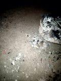 Papel pintado del fondo de la textura del wasteage de la quemadura del fuego Ejemplo vivo del vector ilustración del vector