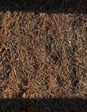Papel pintado del pino Imagen de archivo libre de regalías