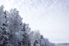 Papel pintado diagonal del camino del sol de la nieve del invierno del paisaje nevado de los abedules del bosque horizontal Foto de archivo libre de regalías