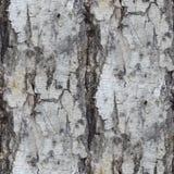 Papel pintado inconsútil del fondo de la textura del árbol de abedul Fotos de archivo libres de regalías
