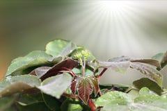 Papel pintado orgánico del verde decorativo de la planta imagen de archivo