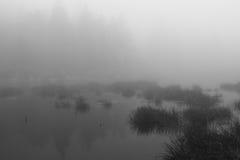 Papel pintado pacífico del lago Imagen de archivo libre de regalías