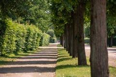 Papel pintado: Parque con los árboles verdes y el papel pintado arreglado de los arbustos fotografía de archivo libre de regalías