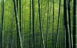 Papel pintado texturizado bosque de bambú verde Foto de archivo libre de regalías