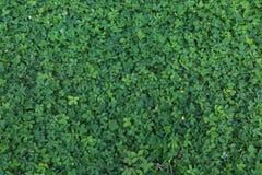 Papel pintado verde de la hoja Foto de archivo