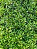 Papel pintado verde de la licencia Fotos de archivo