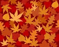 Papel pintado vibrante coloreado de las hojas de otoño Fotografía de archivo libre de regalías