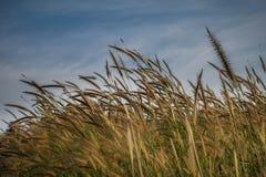 Papel pintado y fondo asombrosos y hermosos con la flor borrosa de la hierba de lámina desenfocado, planta floreciente de la hier Fotografía de archivo libre de regalías