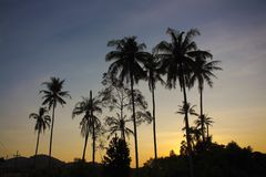 Papel pintado y fondo de la salida del sol del árbol de coco Imágenes de archivo libres de regalías
