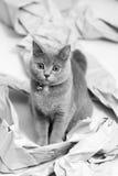 Papel plegable fotos de archivo libres de regalías