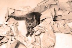 Papel plegable foto de archivo libre de regalías