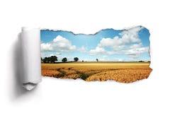 Papel rasgado sobre un paisaje del campo de trigo del verano Foto de archivo