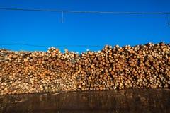 Papel reduzindo a polpa dos registros de madeira fotos de stock royalty free