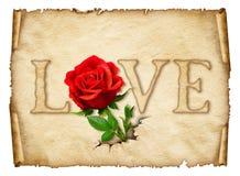 Papel rizado viejo con la rosa del rojo, espacio para el texto o imágenes stock de ilustración