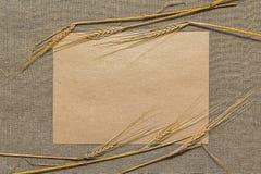 Papel vacío con las espiguillas del trigo Fotos de archivo libres de regalías