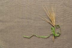 Papel vacío y espiguillas atados con la cinta verde Imagen de archivo libre de regalías