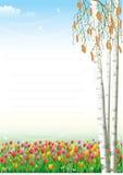 Papel vazio com os tulips no fundo Foto de Stock
