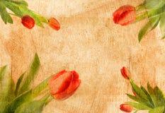 Papel velho com teste padrão de flor gasto Foto de Stock