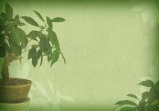 Papel velho textured bonsais Imagem de Stock Royalty Free