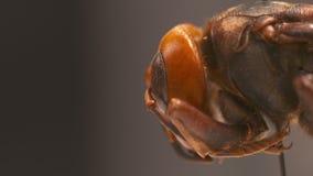 Papel vermelho Ant Head video estoque