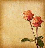 Papel vestido velho com rosas Imagens de Stock