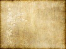 Papel viejo con diseño floral Imagenes de archivo