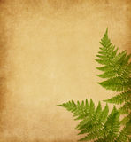 Papel viejo con dos hojas verdes de helecho Fotografía de archivo libre de regalías