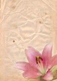 Papel viejo con el lirio rosado Imagen de archivo libre de regalías