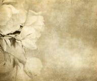Papel viejo con las rosas Imagen de archivo libre de regalías