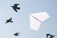 Paper airplane flying with birds Royalty Free Stock Image