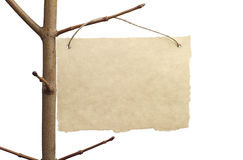 Paper for announcement closeup. On a tree branch isolated on white Stock Image